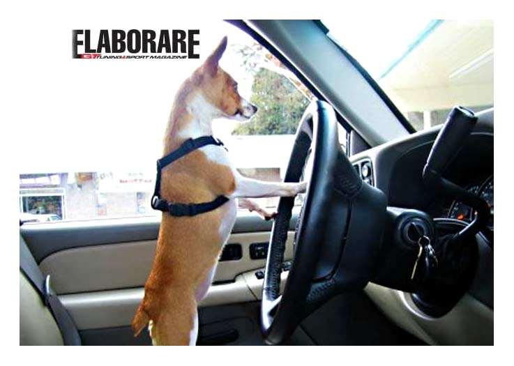 Photo of Pilota automatico in auto